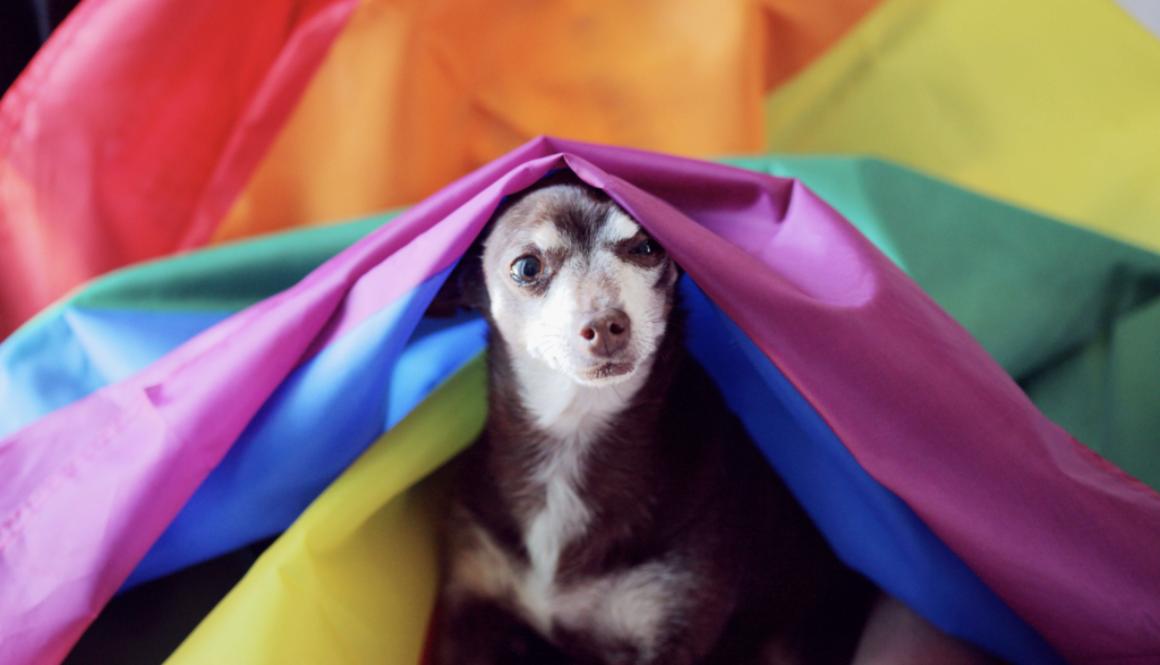 homosexualitet djur_